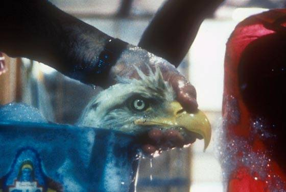 eagle wash Exxon Valdez